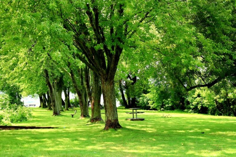 Beautiful trees in Bayfront Park